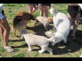 Top 10 Funny Animals. Funny Animal Pictures. Dogs Funny Clips. Comedy Fails & Bloopers.