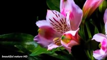 Blooming Flowers Beauty of Nature