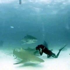 Le réflexe de ce plongeur va lui sauver la vie
