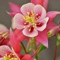 flowers n FLOWERS