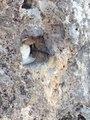 Çukurca Kaletepe'den Yansıyan Kareler Mücadelenin Hangi Şartlarda Yapıldığı Gözler Önüne Serdi