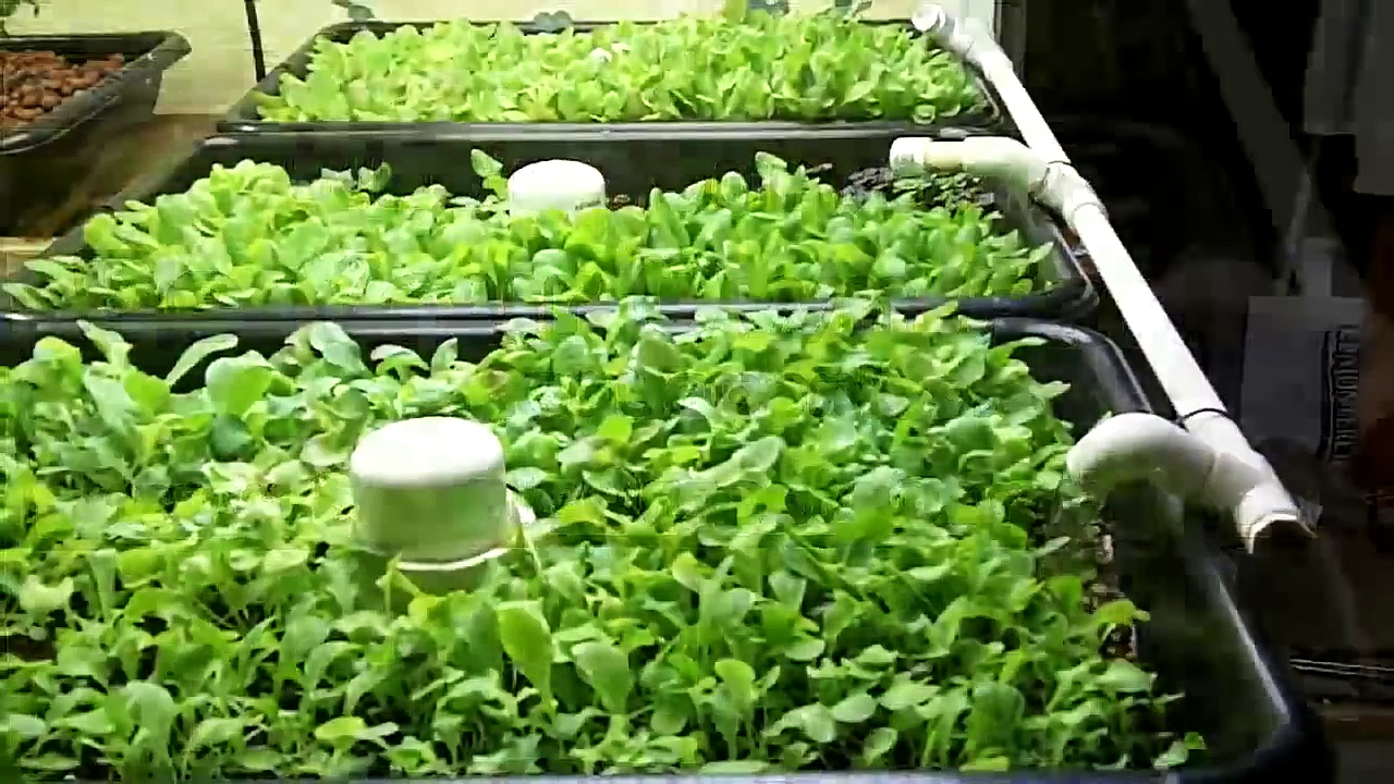 Aquaponics Design Home Build