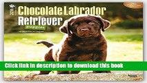 Read Labrador Retriever Puppies, Chocolate 2016 Square 12x12 (Multilingual Edition)  Ebook Free