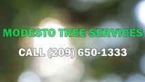 Tree Service Modesto CA - Tree Trimming, Tree Removal & Stump Grinding