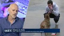 Chiens et chats : en Italie, des chiens pour remettre les prisonniers debout