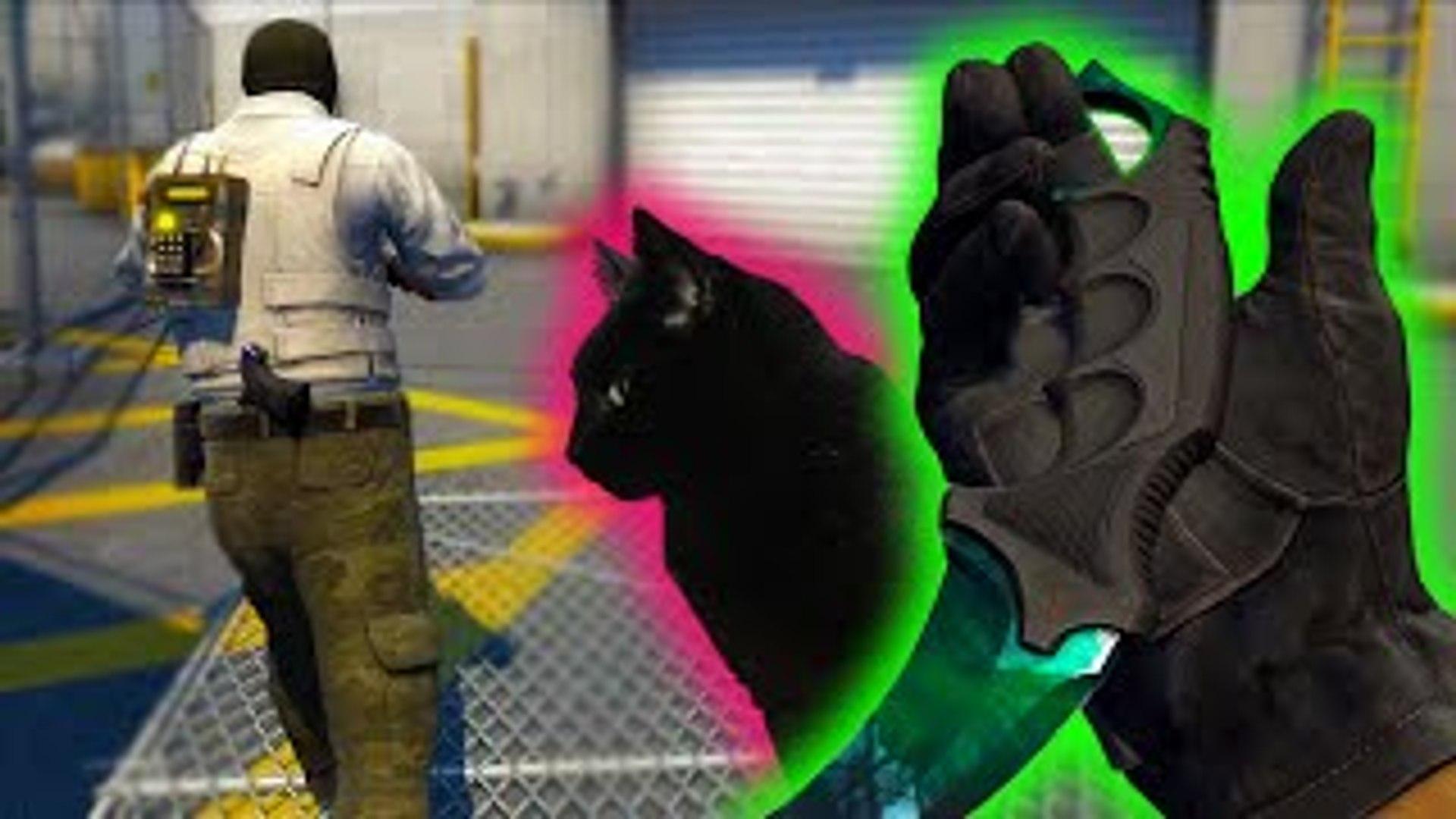 Bots and Cats [CS:GO Funny Moments]