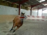 Juvano saut puissance 1m45