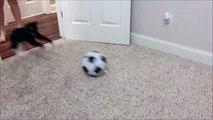 Ce chat se prend pour un joueur de foot et c'est le drame!