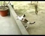 Regardez ce bébé singe embêter un chat... Hilarant et tellement mignon!
