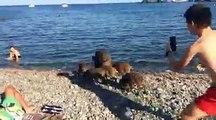 Des sangliers se baignent sur une plage au milieu des touristes (1)