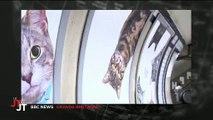 Le métro à Londres envahit par des photos... de chats ! Regardez