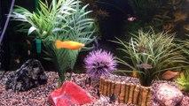 Mon Aquarium de poissons d'eau douce