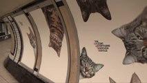 Le métro de londres envahit par des chats!