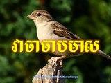 Sin Sisamuth - Veacha Chab Meas - Sin Sisamuth Song