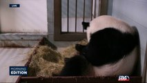 09/15: Environmental news : pandas taken off endangered species list