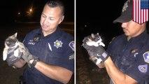 Fresno cops rescue kitty from drain pipe using half-eaten burrito
