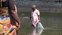 Pour une pêche durable du poulpe à Mayotte