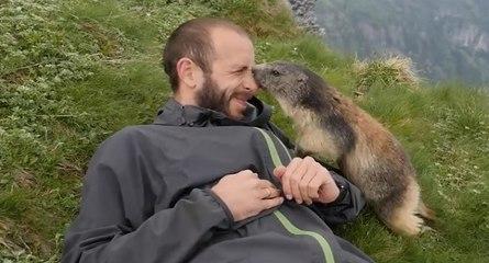 Formidable moment de tendresse entre une marmotte et un randonneur