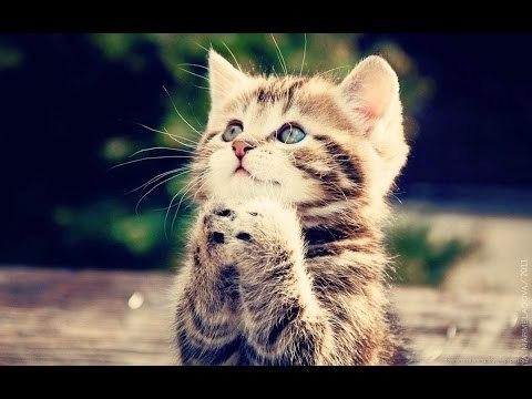 Unduh 66+  Gambar Kucing Lucu Bergerak Dan Bersuara Paling Bagus Gratis