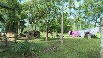 A Bornéo, des bûcherons cessent les coupes de bois illégales