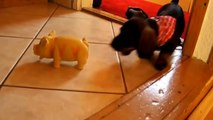 Funny Animal Videos: Puppies Barking Compilation