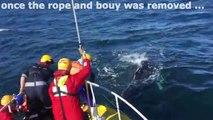 Sauver une baleine piégée dans des filets
