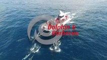 Dolphin watching & Beach BBQ  by AlgarExperience (Albufeira, Algarve, Portugal)