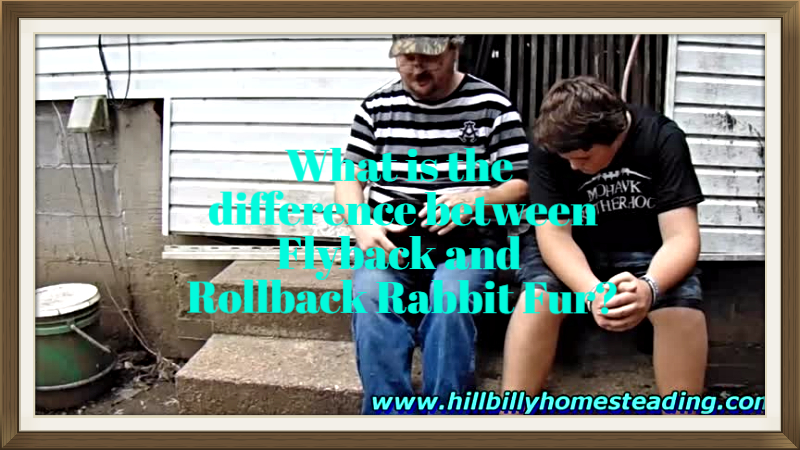 Rabbits – Explaining the Difference Between Flyback and Rollback Rabbit Fur.mp4