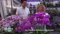 La folie des orchidées - Reportage - Visites privées