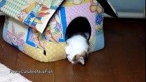 Une ribambelle de chats et chatons endormis bizarrement !
