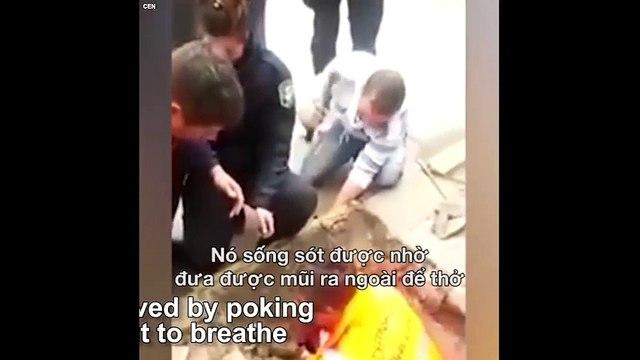 Màn gỉai cứu chú chó becgie bị kẹt dưới cống
