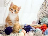 #Cute Little Kitten 2016 #pictures of cats and kittens #video compilation