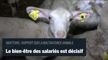 """Rapport sur les abattoirs : """" Du salarié au responsable de l'abattoir, il y a un intérêt commun à ce que le bien être animal soit respecté"""" le bien-être des salariés est central"""