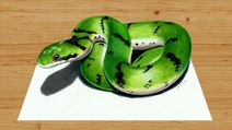 Speed Drawing of a Green Snake How to Draw Time Lapse Art Video Colored Pencil Illustration Artwork Draw Realism