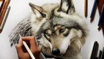 Speed Drawing of a Wolf  How to Draw Time Lapse Art Video Colored Pencil Illustration Artwork Draw Realism