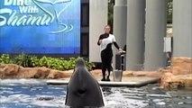 Suite à plusieurs protestations, il est désormais interdit  en  Californie d'élever des orques en captivité !