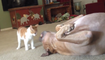 What Happens When You Introduce A Pit Bull To A Newborn Kitten