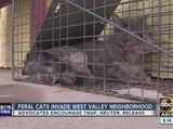 Man sets up traps to catch feral cats