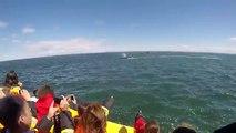 Une énorme baleine passe sous le bateau de touristes