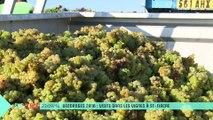 Sur Place aux vendanges (1/2) : dans les vignes à St-Fiacre