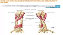 Reviews Atlas of Human Anatomy: Including Student Consult Interactive Ancillaries and Guides, 6e (Netter Basic Science)