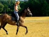 Les filles a cheval