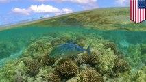 Obama crée la plus grande réserve naturelle au monde