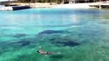 114_【面白い】不思議な映像-謎の生物-mysterious-movie--mysterious-island