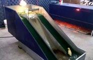 Ces canards jouent sur un toboggan et c'est trop mignon !