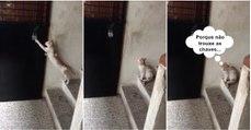 Quando um gato chega a casa tarde e percebe que se esqueceu das chaves...