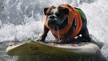 Los perros también pueden surfear
