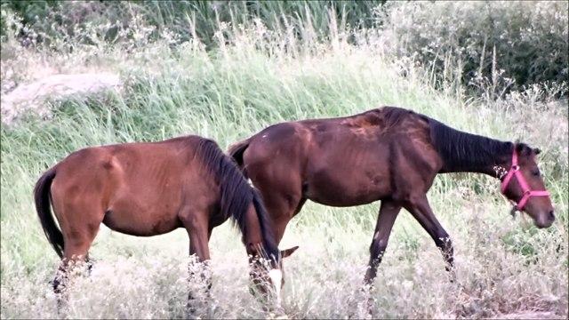 What do horses eat - Horse Diet