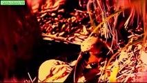 Las 10 Mejores Video de la Serpiente Come serpientes Full HD 720 | King Cobra Come Python | Animal Peleas