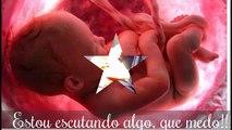 Gestação com 2 meses Gravidez 1 mês...Gestação 3 meses..Gestation 2 months...Gestation 4 months
